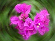 220x220_1238602285722-flower