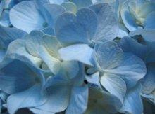 220x220 1236044803299 blueflower