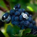 130x130 sq 1236643272225 wedding146