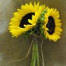 130x130 sq 1318531271286 sunflowerbridesmaidbouquet