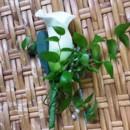 130x130 sq 1395847298293 calla lily boutonniere lr
