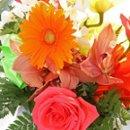 130x130 sq 1243517895598 blooms2
