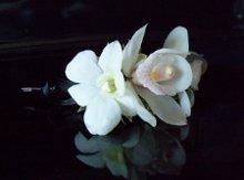 220x220_1284738777430-orchids002