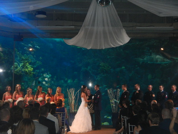 Music on the move dj entertainment event lighting Tampa aquarium military discount