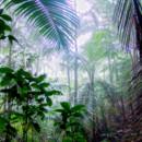 130x130 sq 1387248880756 el yunque foliag