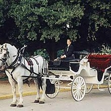 Austin carriage transportation austin tx weddingwire for Texas motor transportation consultants