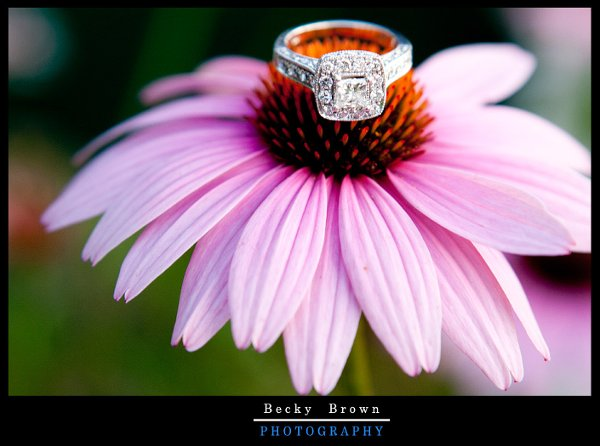 photo 55 of Becky Brown Photography