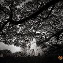 130x130_sq_1332810142275-joserocesphotography100