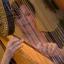 130x130 sq 1369877169365 florence harp