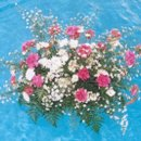 130x130 sq 1241374518978 brendasflowers037