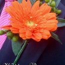 130x130 sq 1363717122202 floral24