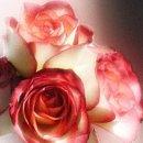 130x130 sq 1242083395484 flowers3