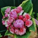 130x130_sq_1245774618046-flowerweddingwire