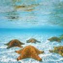 130x130 sq 1468325867789 backstarfish