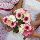 130x130_sq_1344577449561-pinkgerberamixedbouquets2