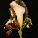 130x130_sq_1406243032433-andrea-parnell-boutonniere-white-miniature-calla-l