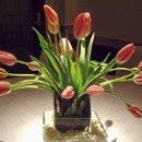 130x130 sq 1338585682939 tulipcenter