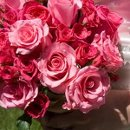 130x130 sq 1245861722937 pink