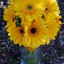130x130_sq_1270956253811-yellowgerberdaisybouquet