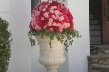 220x220 1370613656629 pinkestateflowers