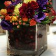 130x130 sq 1255985752390 beautifulbloomssquarecranberries