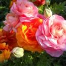 130x130 sq 1460141966308 beautiful flowers everywhere 0