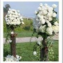 130x130_sq_1251478982421-whitealterflowers