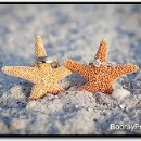 130x130_sq_1328029389696-beachweddingphotographytampabay4