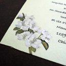 130x130_sq_1246588368897-cherryblossom2