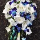 130x130 sq 1385252817582 cascading white hydrangea  blue dendros