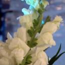130x130 sq 1385602863507 cary mckinley flower