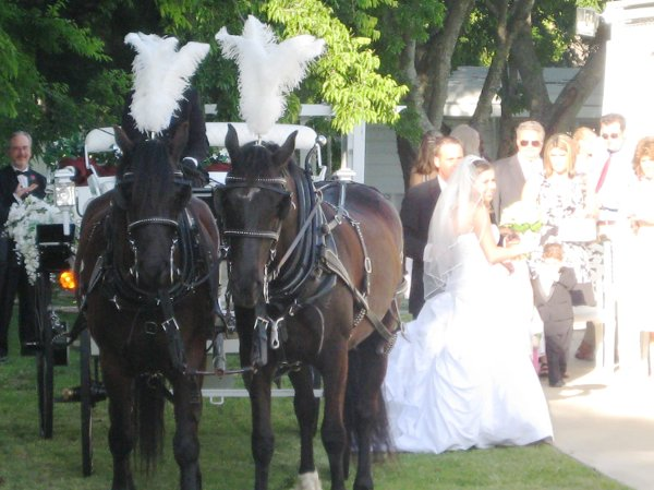 photo 11 of Threejays Carriages