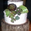 130x130 sq 1466066178889 succulents betty crocker