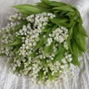 130x130 sq 1304007553896 lilyofthevalleybouquet1web