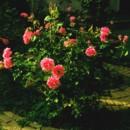 130x130 sq 1376493090749 flower7