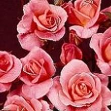 220x220 sq 1247517293025 flower