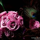 130x130 sq 1277163752842 roses