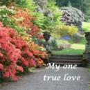 130x130 sq 1384798635776 spring true lov