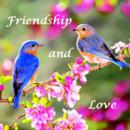 130x130_sq_1384798668204-spring-friendshi