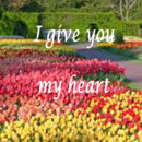 130x130 sq 1384798682354 spring give you my hear