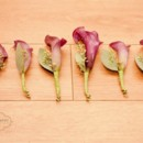 130x130 sq 1472841581897 flowers 9