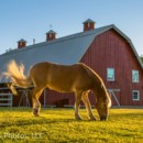 130x130 sq 1427927896361 barnhorse