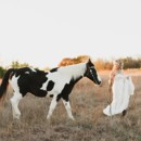 130x130 sq 1476670559496 alex plano bridal portraits horse field sunset0011