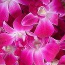 130x130 sq 1253447365468 pink