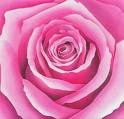 220x220 1250115417364 pinkrose