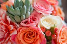 220x220 1413814180877 wildflowersoftolland