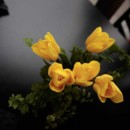 130x130 sq 1369953561664 stellar events pic yellow centerpiece