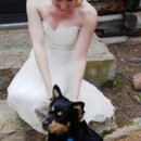 130x130 sq 1369953859657 stellar events pic wedding dog