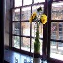 130x130 sq 1253044358109 hollysrehearsalsunflowers1