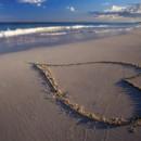 130x130_sq_1381957250312-tropical-hearts